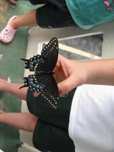 Kat with butterfly